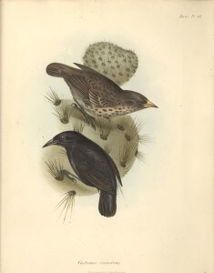 איור של דרווין, 1841