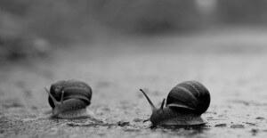 נצמדים גם למשטח רטוב. צילום: Lee Carson, Flickr
