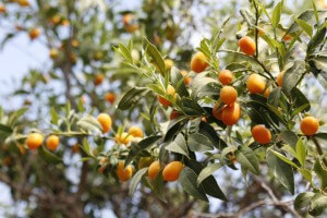 גם חקלאות היא אחד משירותי המערכת האקולוגית. צילום: shira gal, flickr