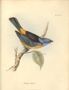 1839_Zoology_F8.11_059