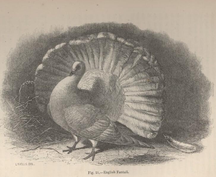 הפרק הראשון בספר מתיש את הקוראים בסיפורים על יונים. רק בפרק השני מתחילה להתברר גאונותו של דרווין. Darwin Online
