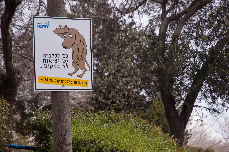 לעתים החינוך עובד, ואחת הדוגמות המוצלחות בישראל היא הקמפיין לאיסוף צואת כלבים. צילום: David King' Flickr