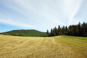 הצלת מזון תאפשר להפוך פחות שטחים טבעיים לשטחים חקלאיים. צילום: Rick Stevens, Flickr