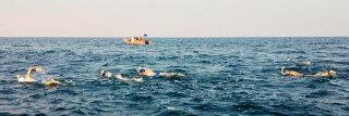 צילום-שחייני ים המלח-cropped