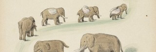 Evolution_of_household_articles,_animals_etc_Wellcome_L0064391