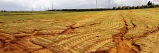 חירוץ בשדה באזור השרון שנגרם כתוצאה מגשמים. סחף קרקע מתרחש לאט, אך לאורך שנים האפקט המצטבר שלו משמעותי ביותר. צילום- דר גיל אשל-cropped