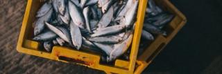 דגי מאכל. תצלום: Nguyễn Linh