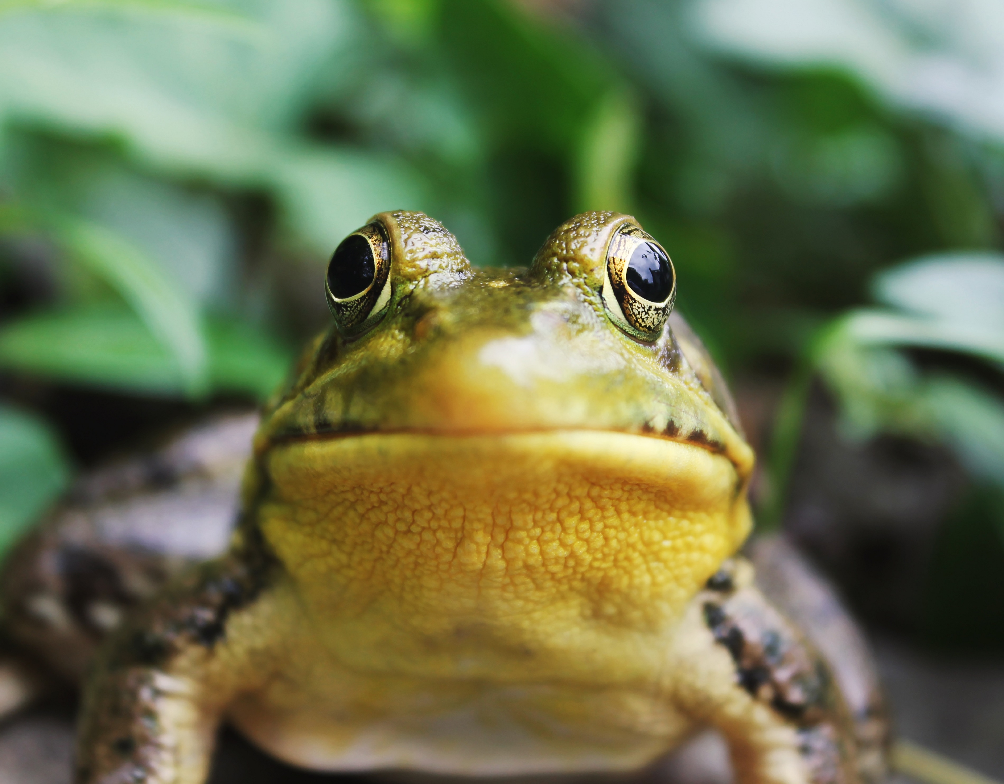 סולמות וצפרדעים