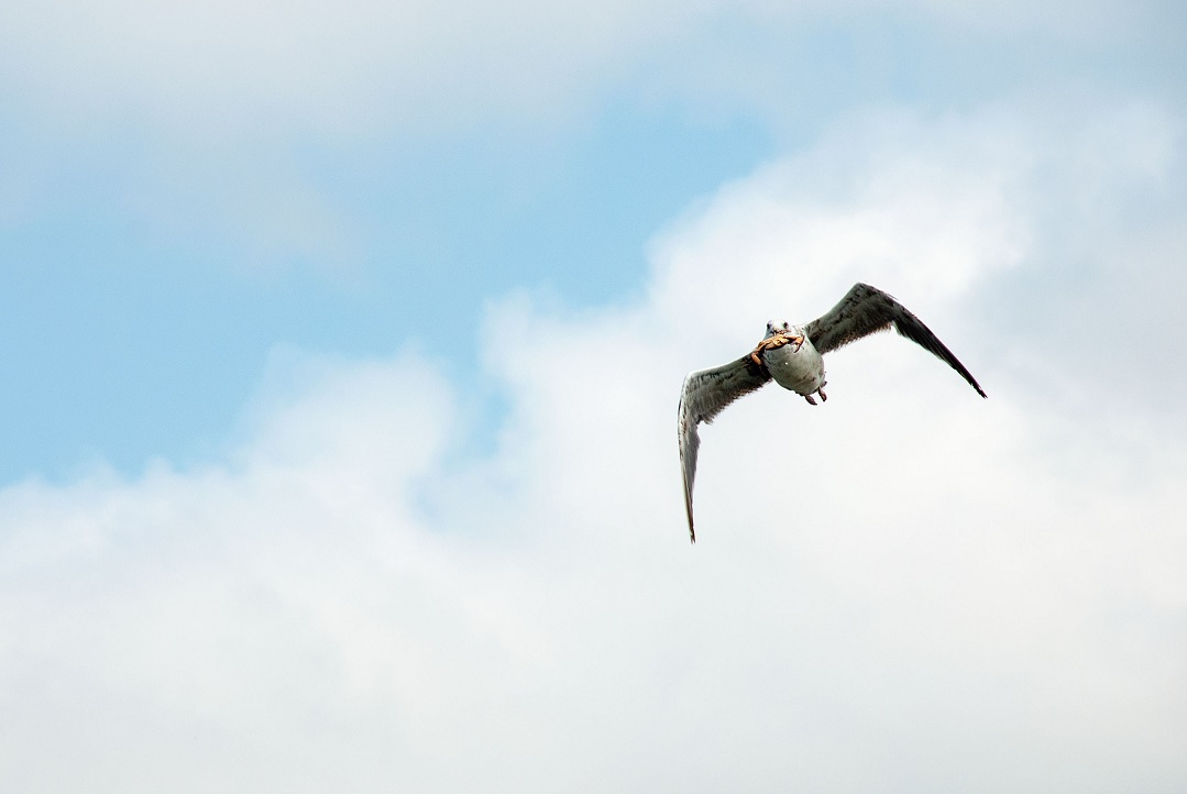 איפה הציפורים שעפות מעל הים?