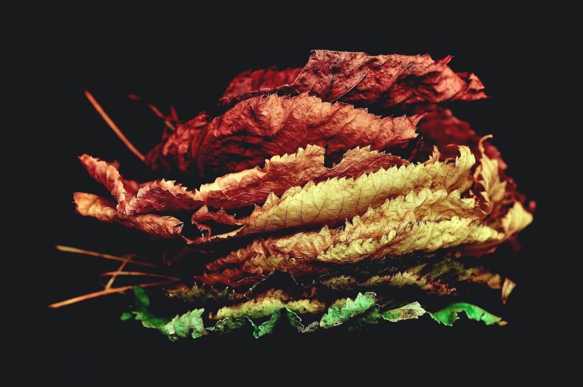 צמחים במכל הדלק