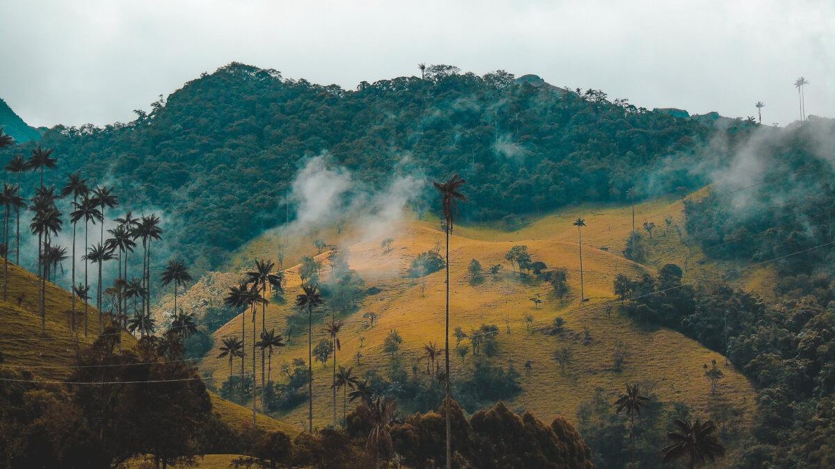 היערות מתגעגעים למלחמת האזרחים