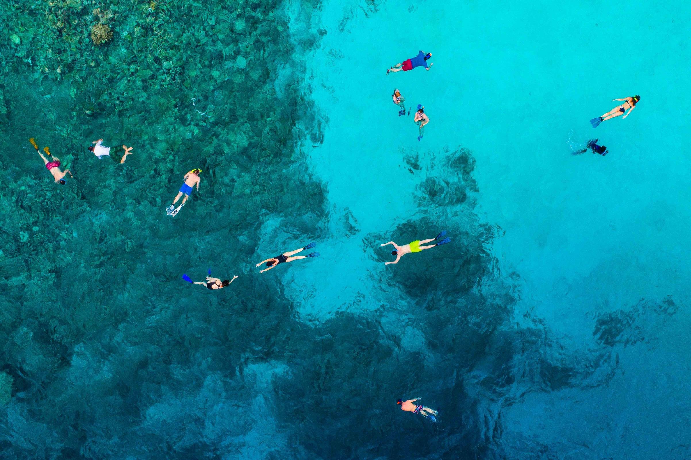 אלמוגים: הדור הבא