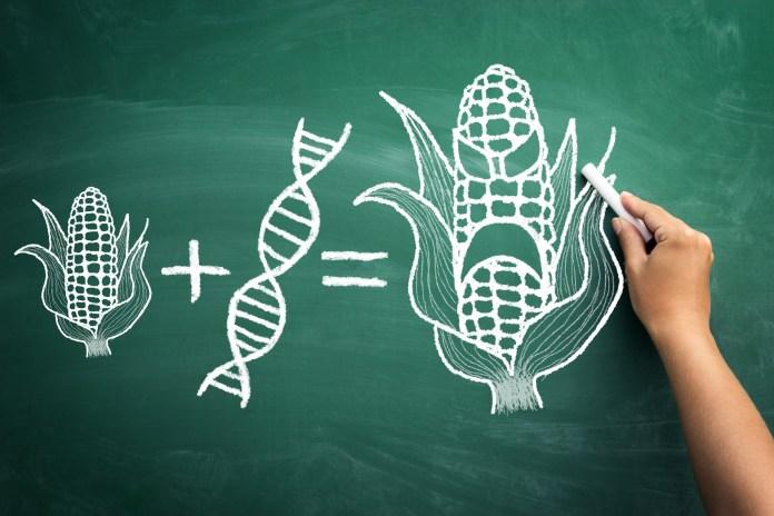 המקרה המוזר של מזון מהונדס גנטית בישראל