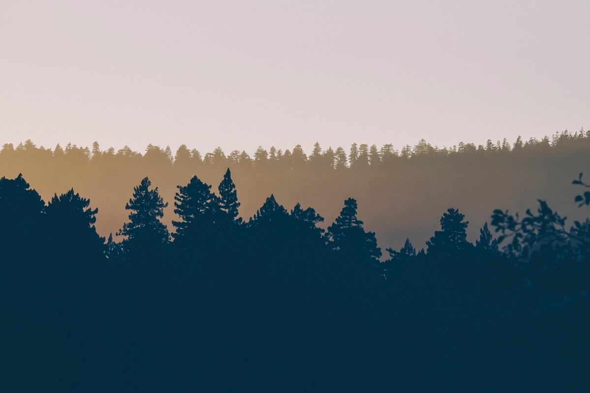 מרוב שינוי אקלים לא יראו את היער