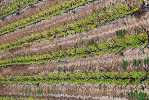 חקלאות היא אחד המקורות העיקריים לפליטת גזי חממה. צילום: StateofIsrael, flickr