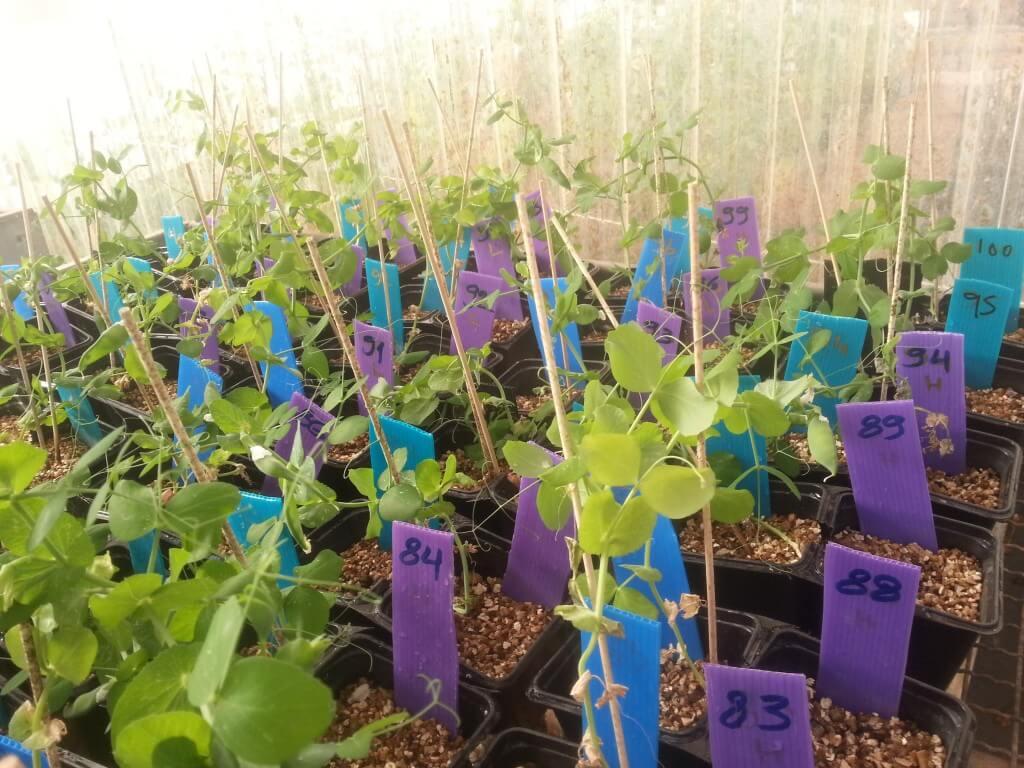 האם לצמחים יש רגשות? לגמרי לא, אבל הם בהחלט מסוגלים להעדיף בית גידול אחד על פני אחר אם הוא טוב יותר בשבילם. צילום: אפרת דנר