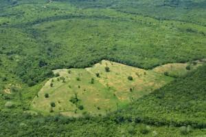 בירוא חלקת יער באמזונס ליד מנאוס, ברזיל. צילום- Neil Palmer (CIAT), Flickr