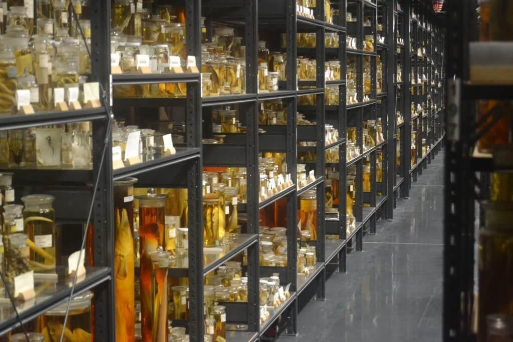 אוסף הדגים במוזיאון הטבע בברלין. חיים שלאחר המוות בפורמלין. צילום: בן ישי דניאלי