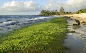 קשה לכמת את הערך הכלכלי של אספקת האצות מהים. צילום: Daniel Ramirez, Flickr
