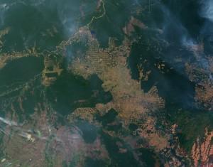 נזקי כריתת יער הגשם באמזונאס, ברזיל. תצלום: Jesse Allen and Robert flickr.Simmon