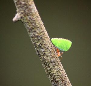 אם עבודתן של הנמלים נפגעת הן מביאות לקן פחות מזון. צילום: Simon Walker, Flickr