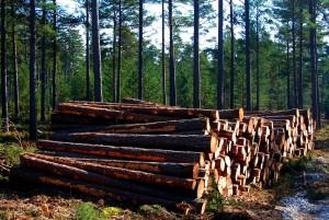 שטחי היערות באירופה לא קטנו למרות כריתה מסיבית במאות 91-18 בגלל נטיעה מוגברת של עצים שמתאימים לשימושים שונים. צילום: Let Ideas Compete, Flickr