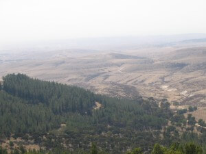 יער יתיר נמצא על סף המדבר והוא מקבע פחמן כמו יערות אירופה למרות התנאים השונים. צילום: Okedem, ויקימדיה