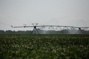 משרד הבריאות קבע הנחיות מחמירות להשקיה בקולחין. צילום: United Soybean Board, Flickr
