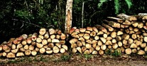 Logs near a local road, Napo Province, Ecuador.. CIFOR, Flickr-cropped
