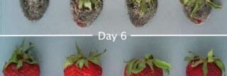 תותים-cropped