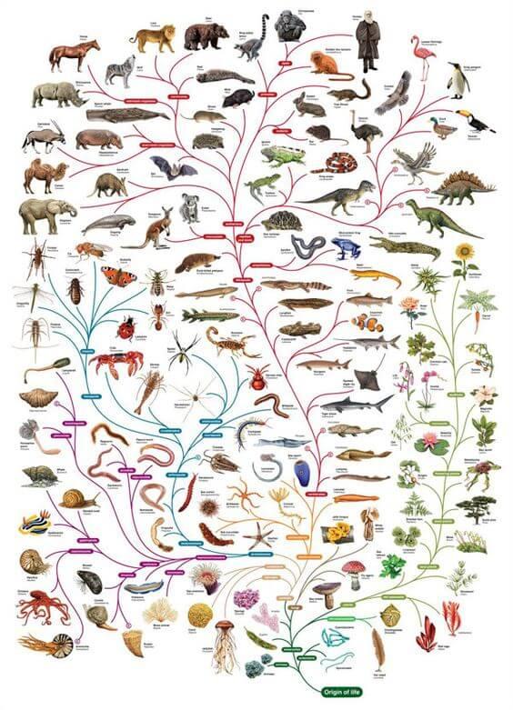 אבולוציה. שינוי האקלים משנה את החיים סביבנו במהירות גדולה