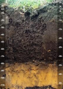 הסנטימטרים העליונים של האדמה מהווים את הקרקע, שכבה עשירה בחומר אורגני וחומרי הזנה החיוניים להתפתחות צמחייה. צילום: Soil Science, Flickr