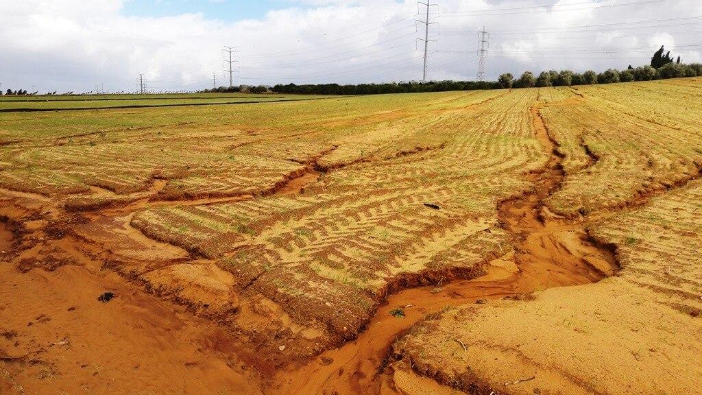"""חירוץ בשדה באזור השרון שנגרם כתוצאה מגשמים. סחף קרקע מתרחש לאט, אך לאורך שנים האפקט המצטבר שלו משמעותי ביותר. צילום: ד""""ר גיל אשל"""