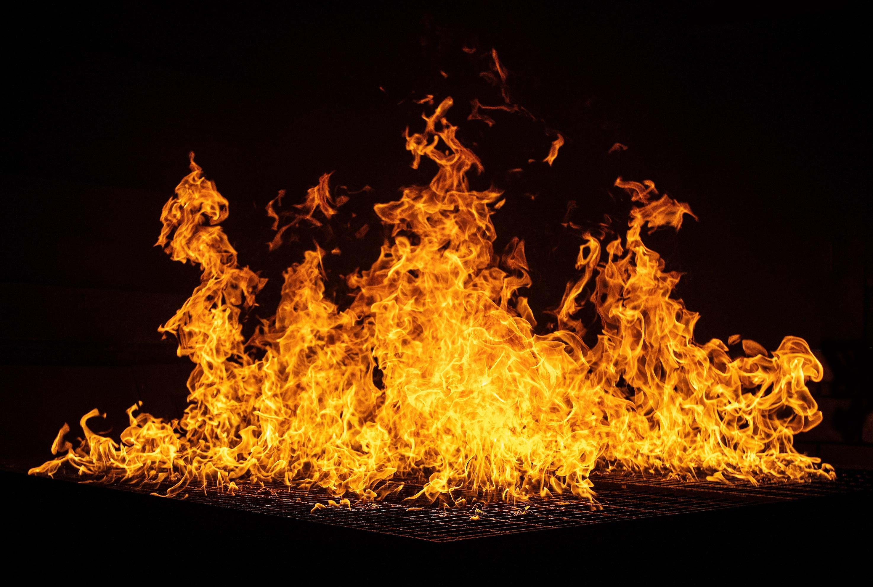 לשרוף אגוזים ולהציל את יערות הגשם