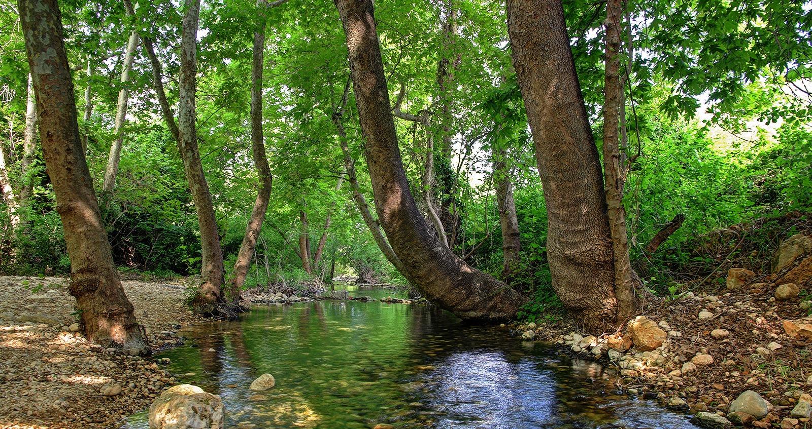 עצים הם לפעמים געגועים לנחל