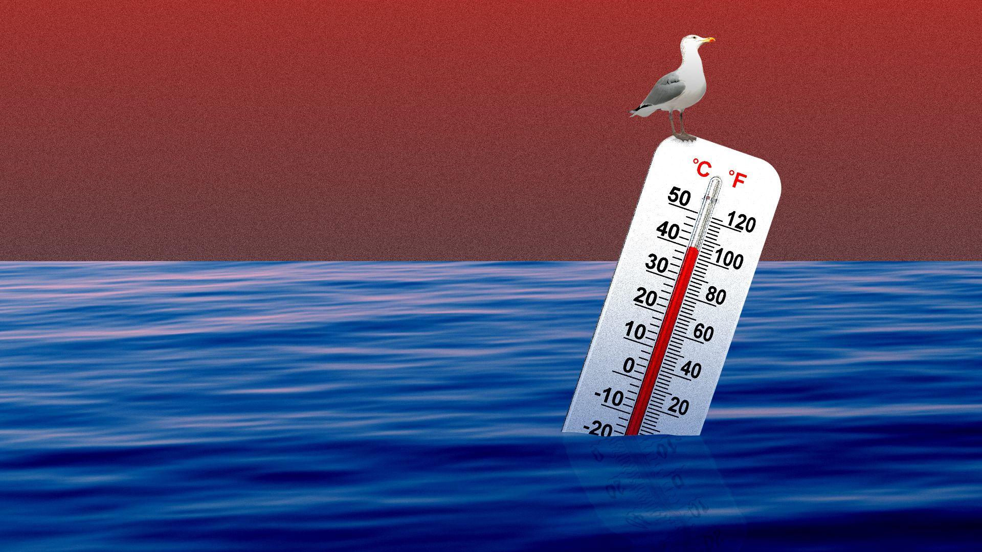 אוקיינוסים על חום גבוה