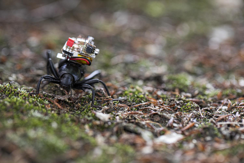 חרק עם מצלמה