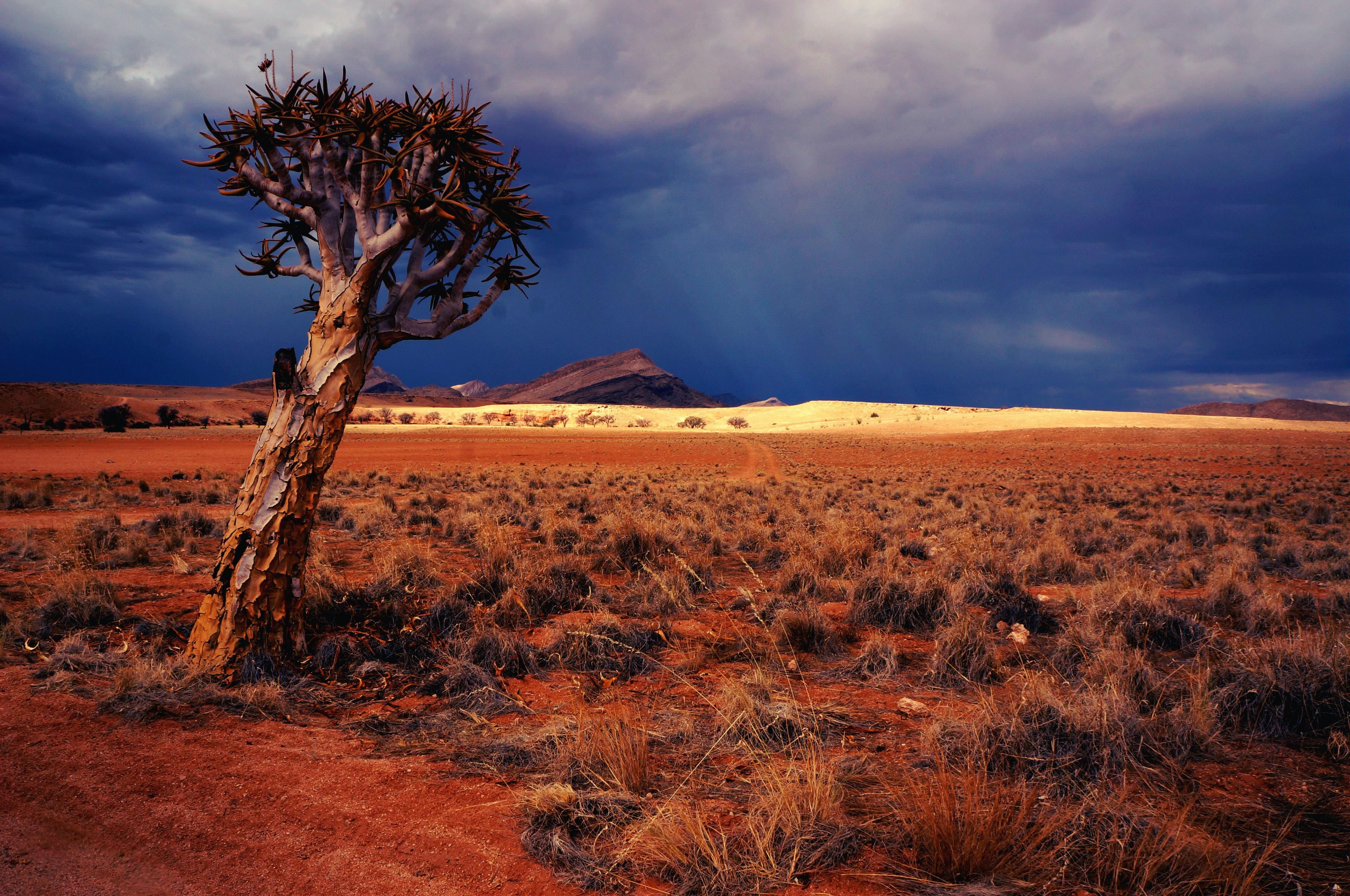 צינור הנפט החדש שמאיים על הטבע באפריקה