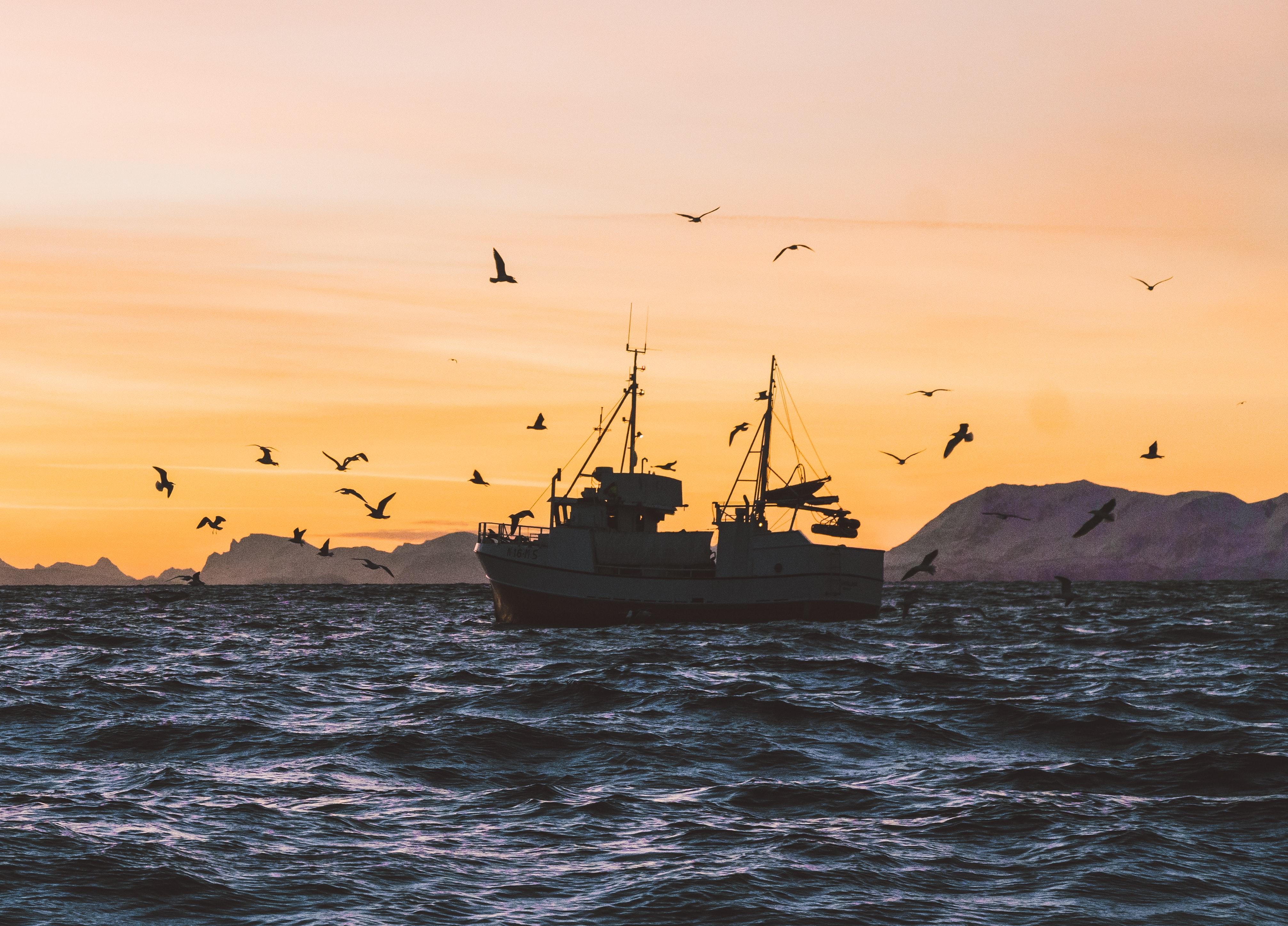לתפוס ברשת את תאגידי הדיג העברייניים