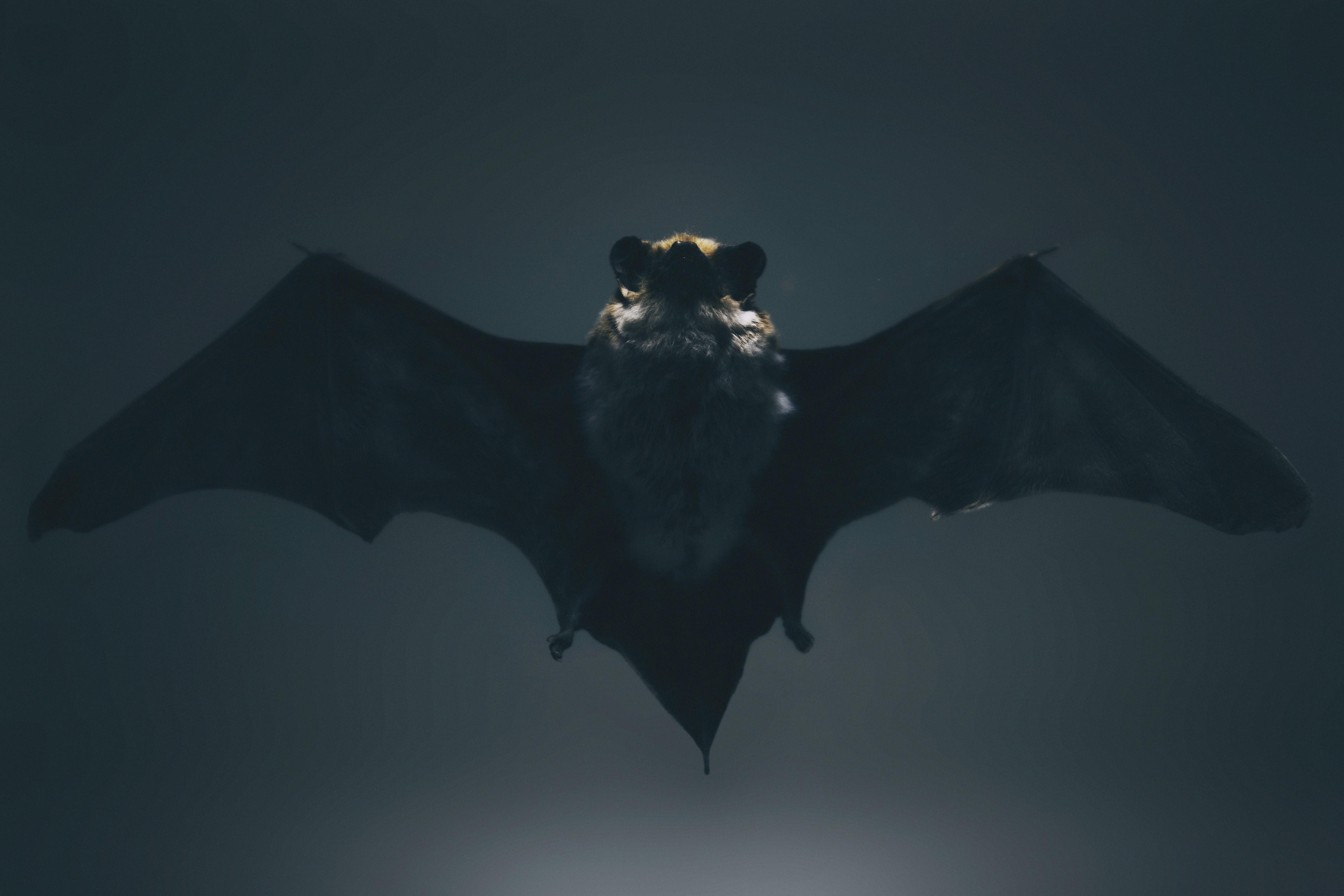 עטלפים בבידוד