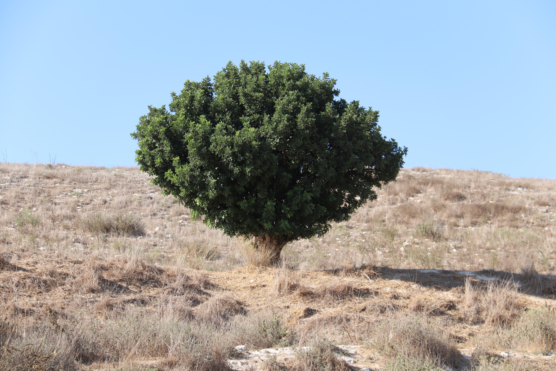 מורשת מעץ