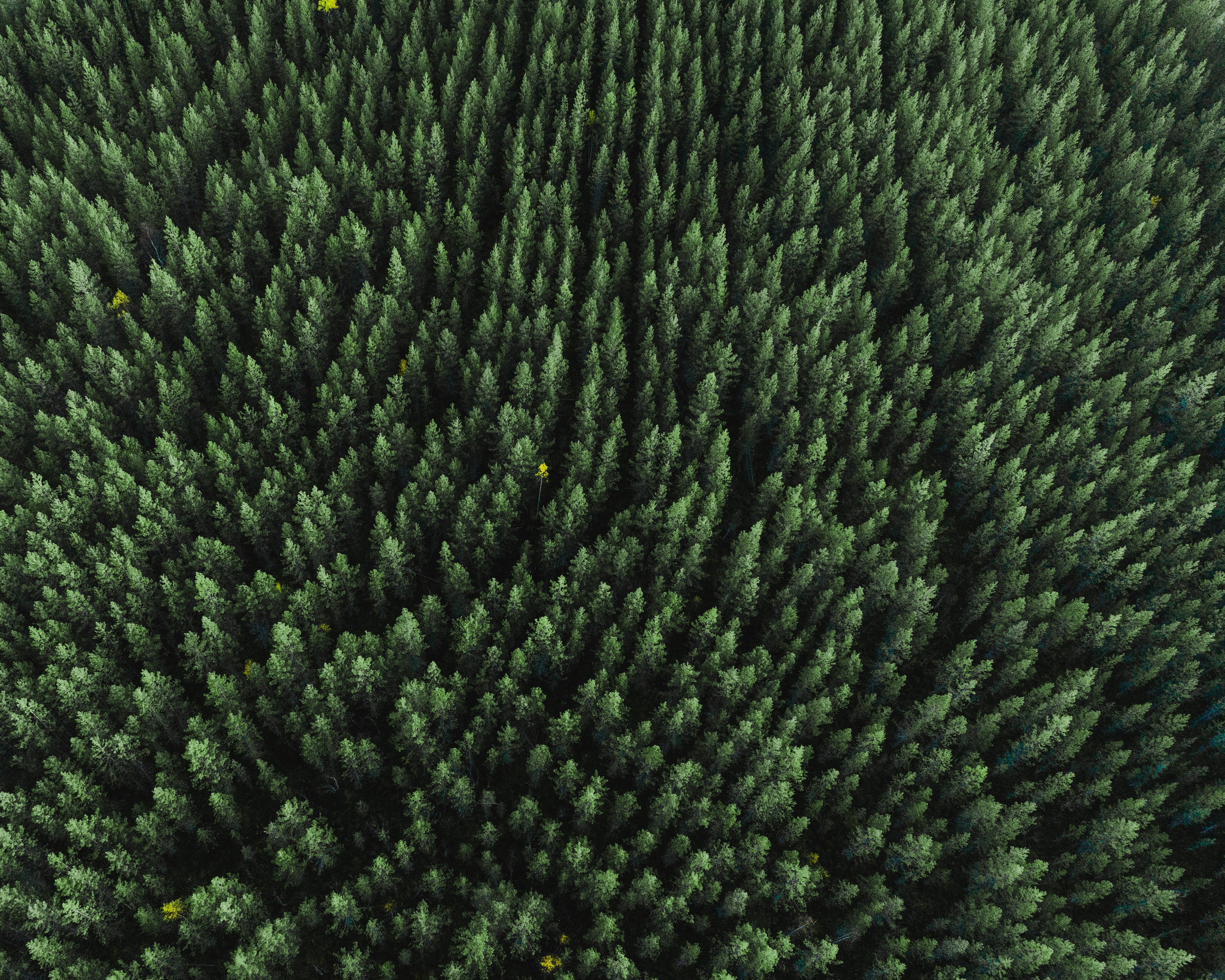 האם יש יותר מדי עצים ביער?