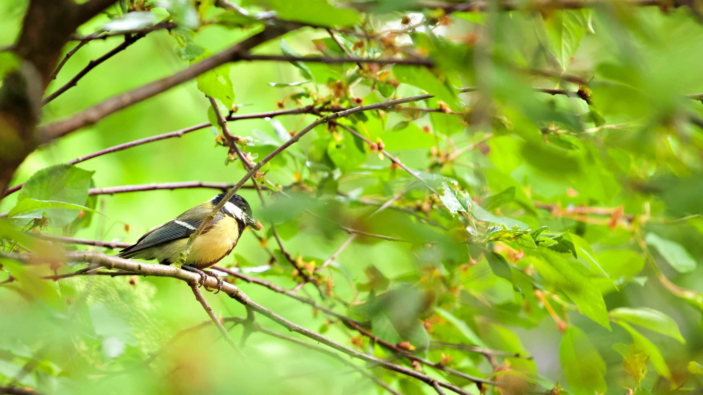 טוב שתי ציפורים בשיח מאחת על העץ