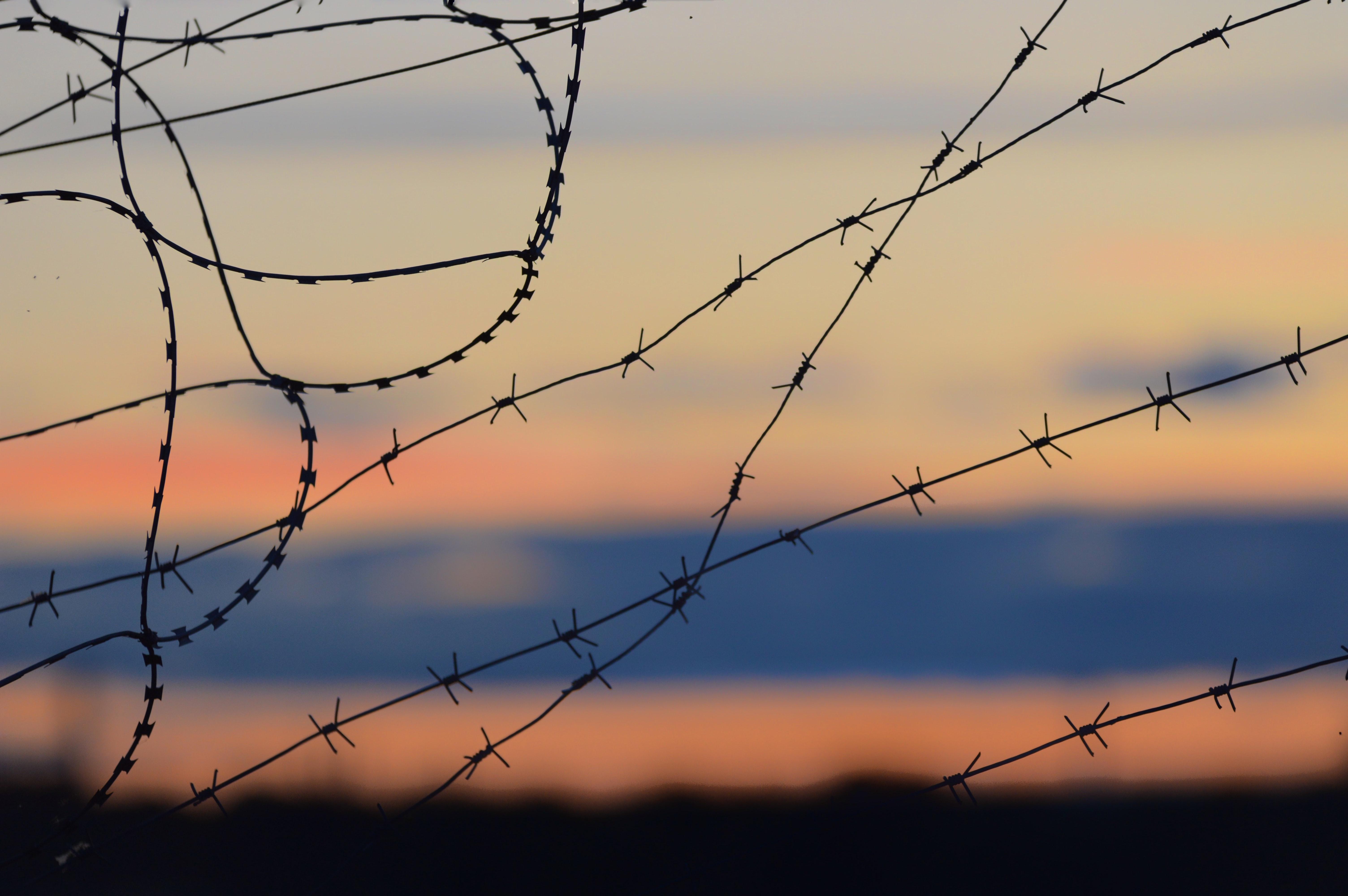העקבות והצלקות שהותירו המלחמות בטבע הישראלי