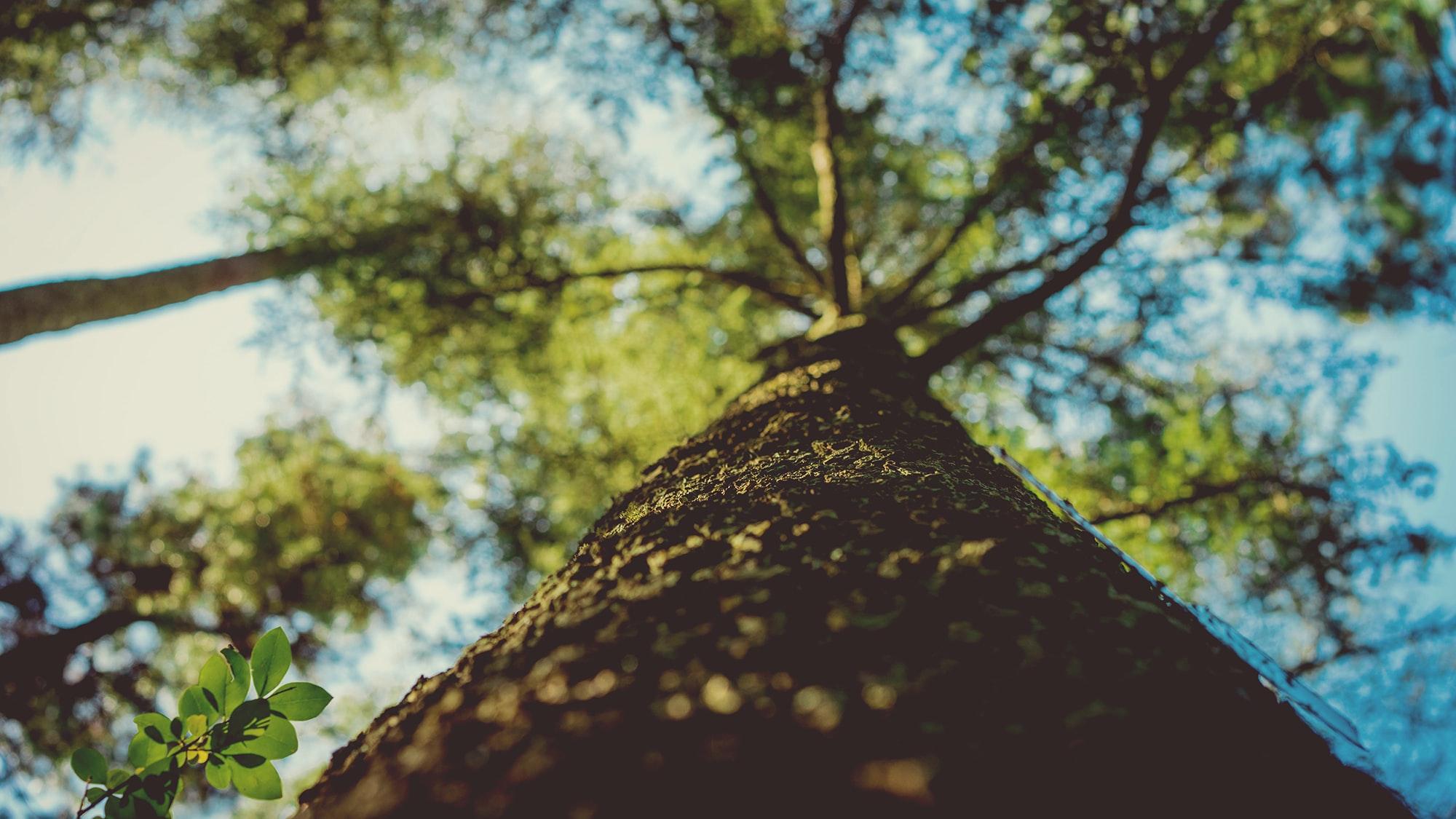 זהירות, ענפים נופלים