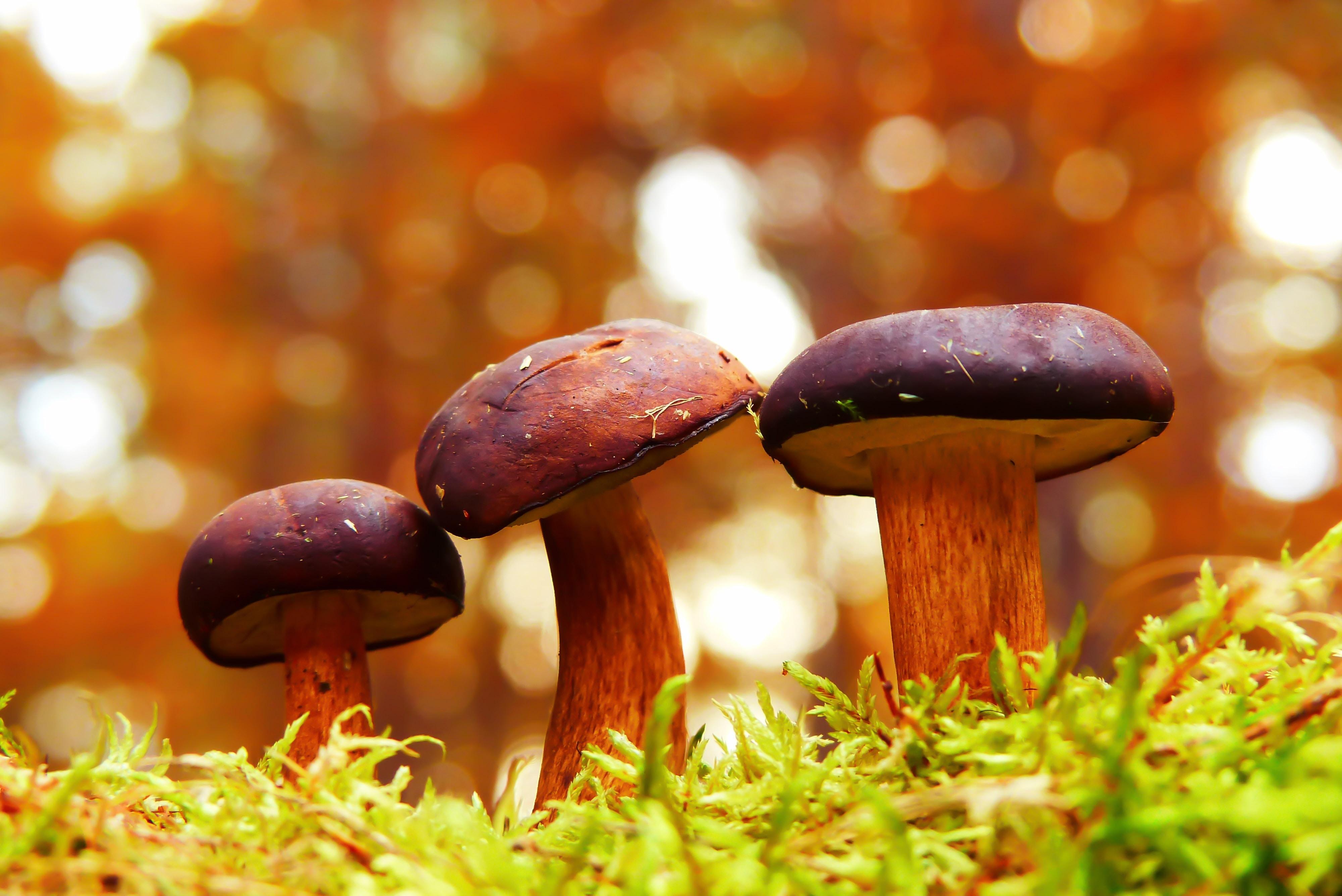 Podgrzybki w lesie rudnickim w Grudziądzu