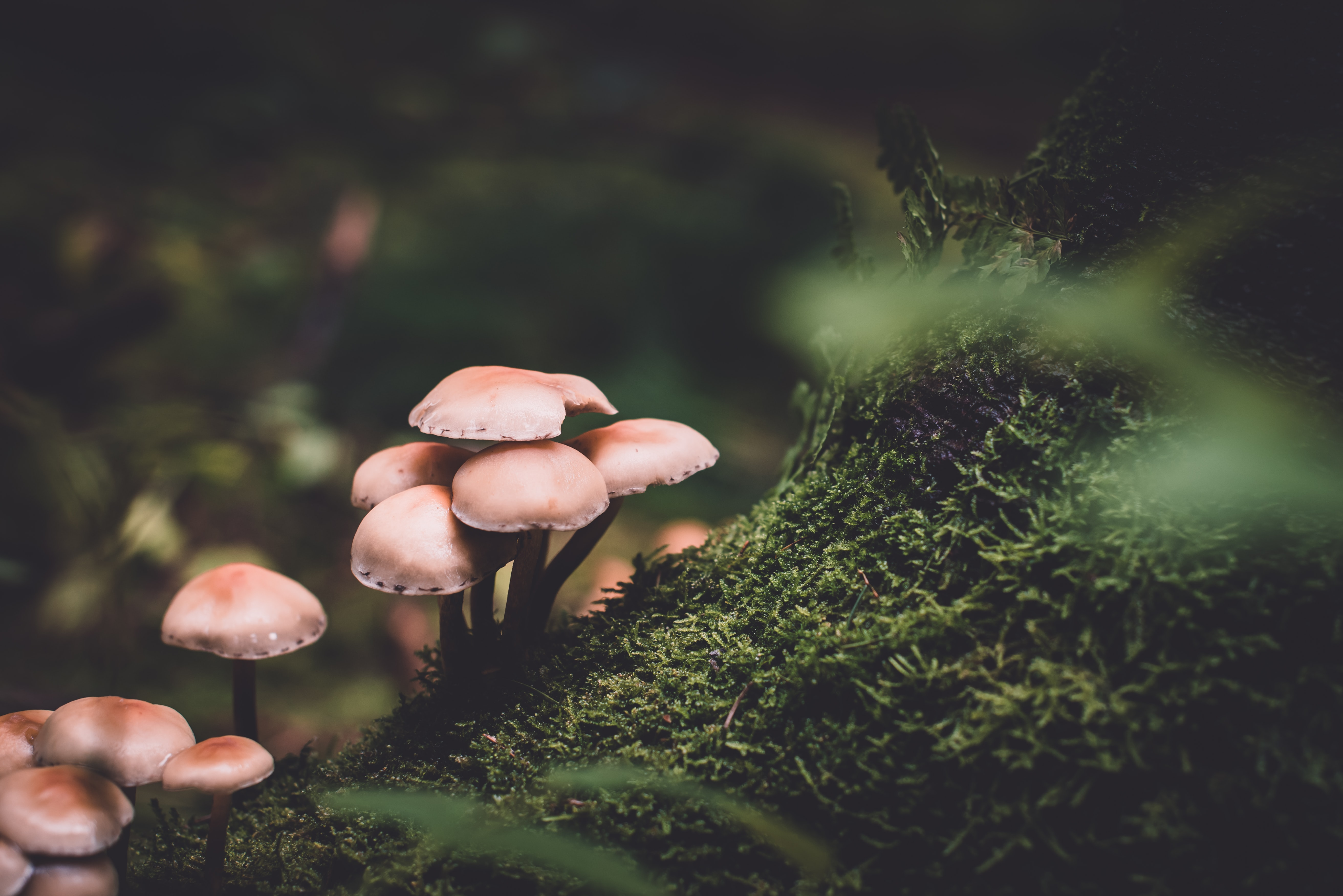 הפטריות שמסייעות לעצים לגדול