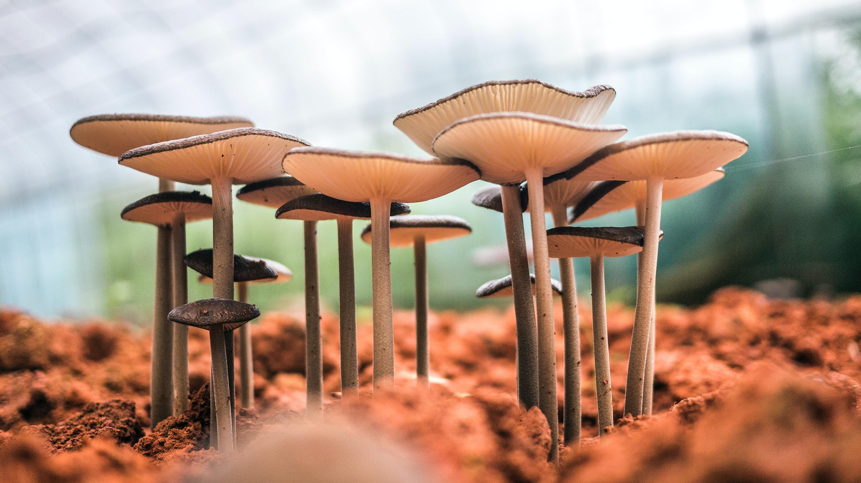 white mushroom bloom during daytime close-up photo