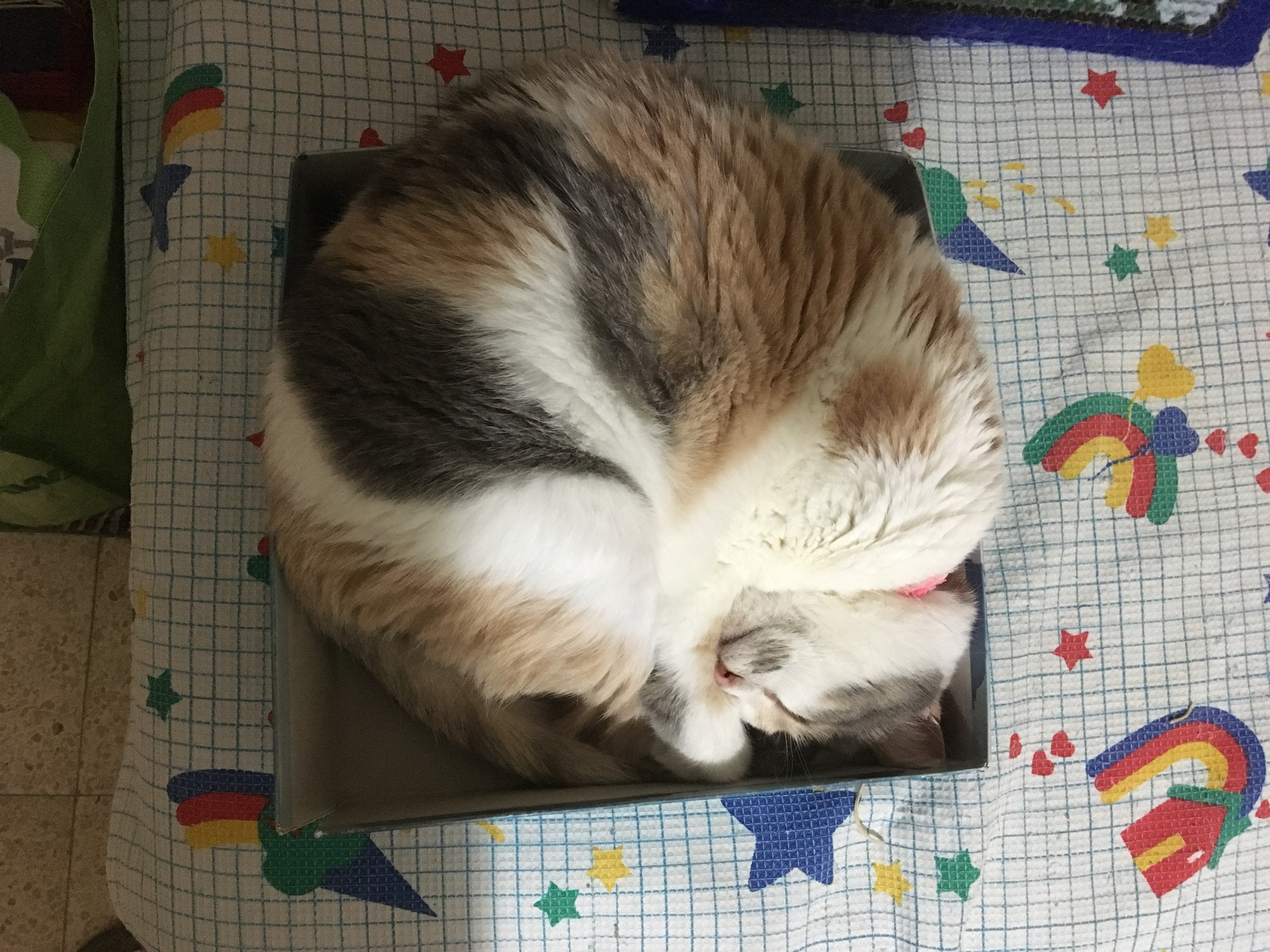 החתול שבקופסה ינצח